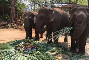 Elephant Care and Trekking